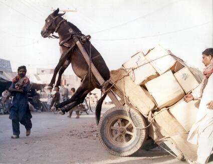 Image result for animal cruelty pakistan
